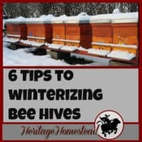 Winterizing bee hives | These 6 tips to winterizing bee hives will give you and your bees the boost they need to get through the winter months into spring and blooming flowers!