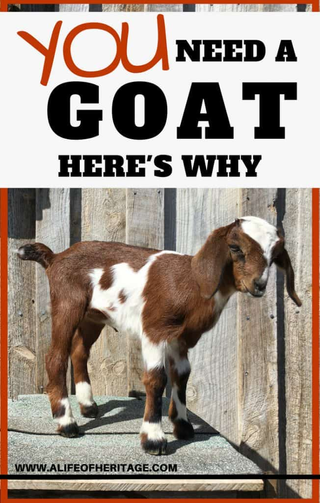 You need a goat. Here's why! If these reasons won't convince you...I don't know what will...
