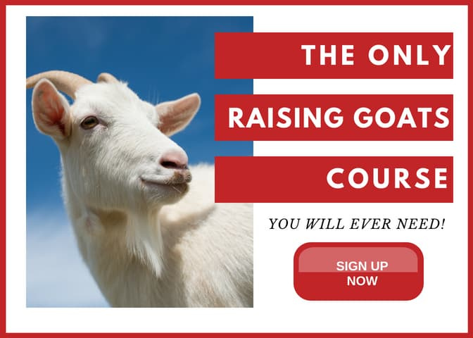 The only how to raise goats course you will ever need. This course will be the deepest and most thorough course you will ever take.