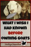 Goats | Goat Care | Owning Goats | 6 things I wish I had known before owning goats. Don't you agree with #5?? But does it stop us from owning them?? Nope! Once a goat lover, always one.