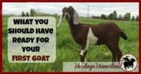 Goat Care | Before bringing home your first goat. As your goats get settled, you will compile this list and more to keep your goats happy and healthy!