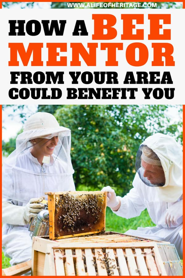 Bee mentors can be a huge benefit for any beekeeper!