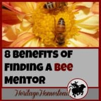 Bees | Bee Care | How to own bees | Bee mentor | Finding a bee mentor can be the key to your success. You don't need to know everything about bees, you just need to know someone else who knows everything.
