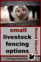 Fencing | Livestock | Fencing for small animals | Goats |Fencing for Goats: One of the four options may just be the perfect solution for you and your goats! Check out your options!