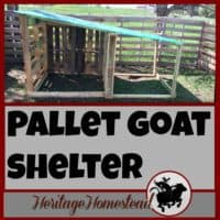Goat House | How to build a goat house using pallets. An easy and cost effective way to use easy to find material to make great winter shelters for your goats.