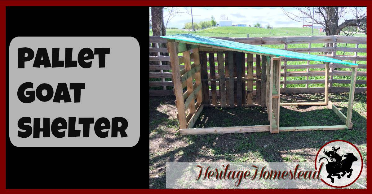 Diy easy free goat house with pictures a life of heritage for Easiest way to build a house