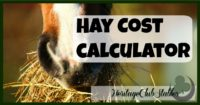 Horses | Horse Care | How to Horses | Use this FREE hay cost calculator to find out how much it will cost you to feed your horse for the year. Get a handle on how much it can and will cost.