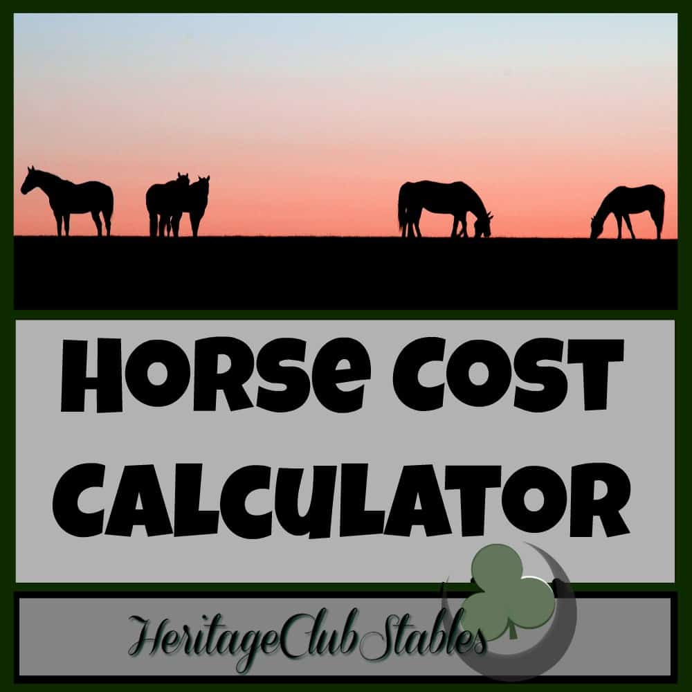 Can You Really Afford a New Horse Right Now?