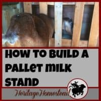 Milk Stand | Goats | Goat Care | How to Milk a Goat | There are many options for a milking stand and they are easy to build. I will share with you how I built mine to give you an idea of what may work for you.