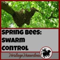 Bees | Bee Care | Bee Swarm Control |Print off this FREE printable to help you manage your hives in the spring to help prevent swarming. Bee swarm control is easy and effective.