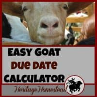 Goat Gestation Calculator. You need to know the best goat care during pregnancy. Pregnant does have many needs to support optimal health. FREE goat due date calculator.
