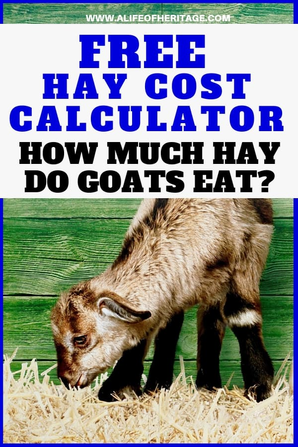 Hay Cost Calculator for goats