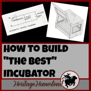 Incubating eggs   Build an incubator   Hatching eggs   How to build the best incubator. The incubator you choose is the most important decision you will make if you plan on regularly hatching eggs.