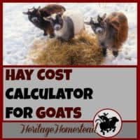 Goat Care and goat feed. How much hay does a goat eat? Use this FREE Hay Cost Calculator to help you answer the question: how much hay do I need for my goat? This will help you make a plan and know how much hay to buy a year.