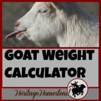 How do I know my goat's weight? | Have you ever ask the question: How to weigh my goat? Here are four ways to weigh your goat and a FREE weight calculator will help you!