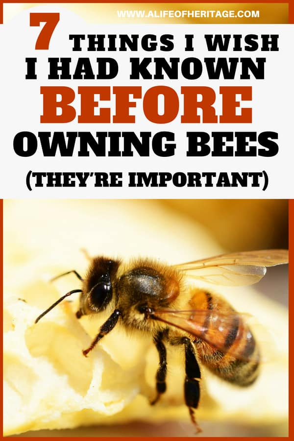 Beekeeping is a fun hobby and business but there are a few things that might catch you by surprise if you have never kept bees before. Don't be caught unawares!