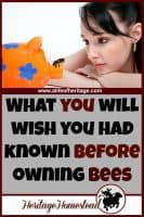 """Bees 