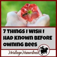 "Before Owning Bees | Leanring about bees | 7 things to consider and two things you need adequate of before owning bees. Here is the ""class schedule"" of what you can expect to learn in the first years"