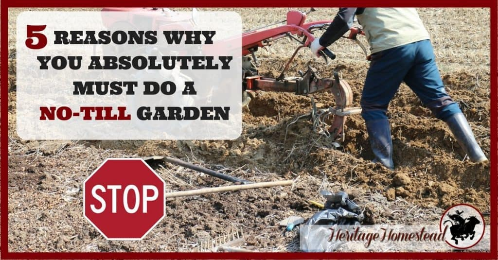 no till gardening and 5 reasons not to till a garden