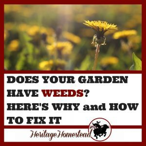 Why Does My Garden Have Weeds? Here's Why and How To Fix It