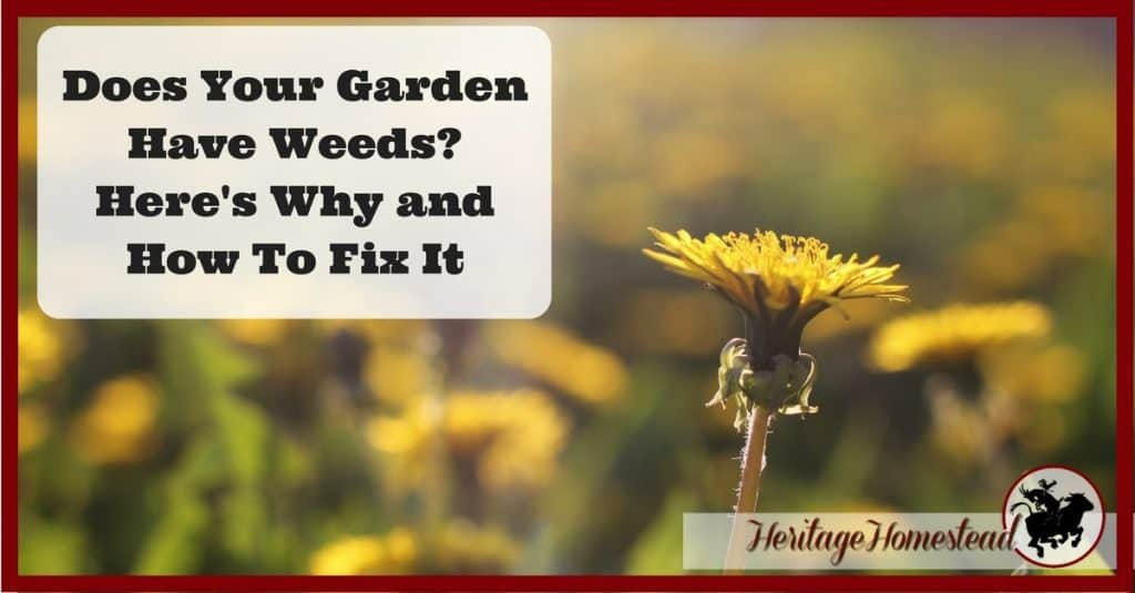 Garden Weeds: Why? Your garden will thrive when you understanding WHY it has weeds. Eliminate them naturally while working with nature.