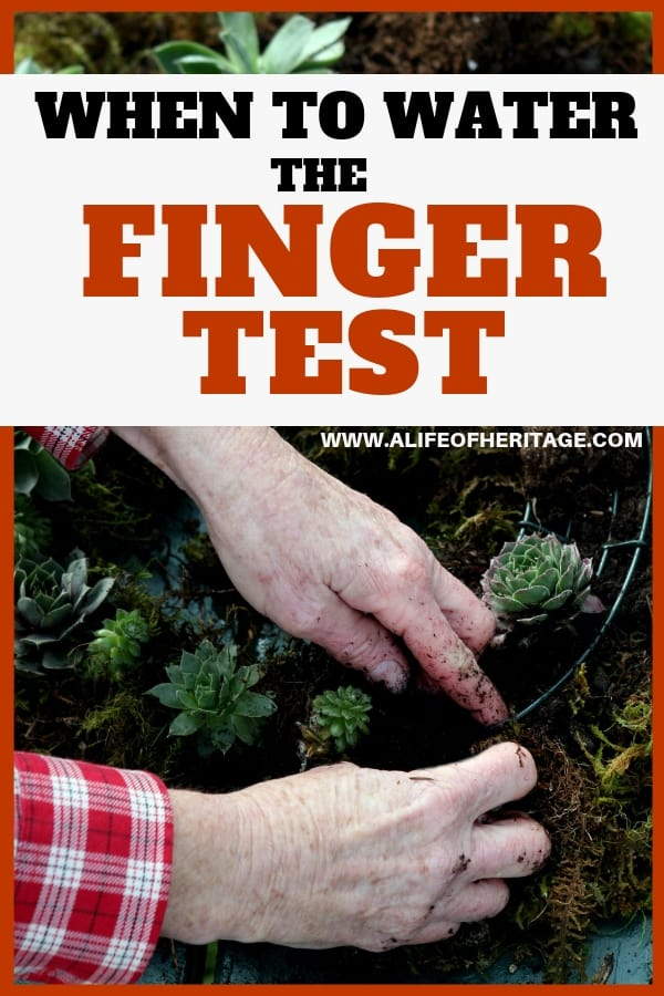 "Watering a garden is quite obviously a very important part of gardening. But when do you water? This ""finger test"" will tell you exactly when you should water."