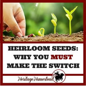 Heirloom seeds are the key to our future. 9 reasons you should plant heirloom and the truth about how much they really cost. Recommendations where to buy