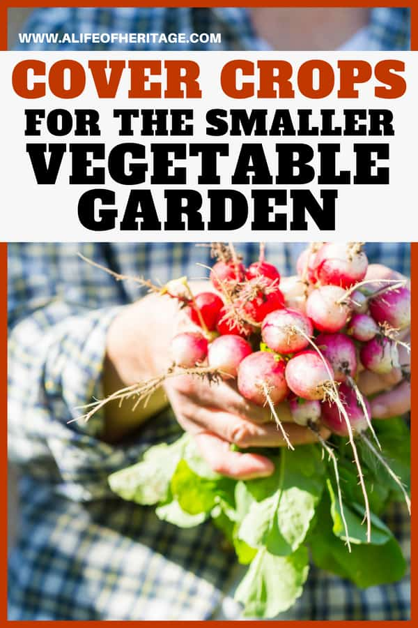 Vegetable gardening can be enhanced with cover crops. Find out how you can add cover crops to your smaller garden.