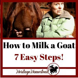 How-To-Milk-A-Goat