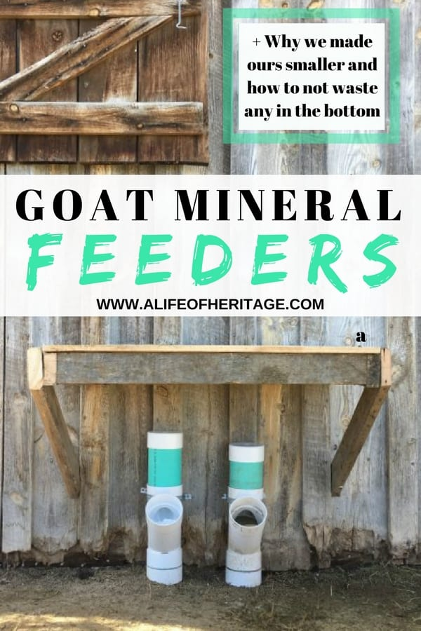 A goat mineral feeder for raising healthy goats. It's easy to make and won't waste expensive minerals. ✓Inexpensive! ✓Easy to make ✓Easy to check and fill.