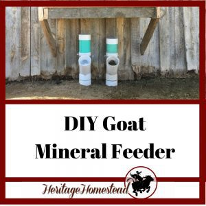 A goat mineral feeder that is easy to make and won't waste any expensive minerals. ✓ Inexpensive! ✓ Easy to assemble! ✓ Durable! ✓ Easy to check and fill.
