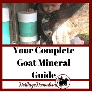 Your Complete Goat Mineral Guide