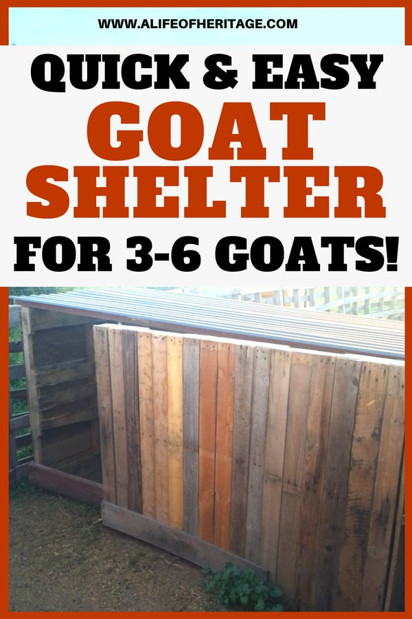 Free Goat Shelter Plans [For 3-6 Goats!] Pygmy Goat House Plans For Cold Weather on maltese house plans, swine house plans, goat wagon plans, sheep hoop barn plans, goat housing plans, goat kidding pen plans, dog house plans, goat shelter plans, pygmy lamb, goat feeder plans, pigeon house plans, goat building plans, goat playground plans, snowy owl house plans, ostrich house plans, pygmy owls as pets, diy goat stanchion plans, chicken house plans, goat barn plans,