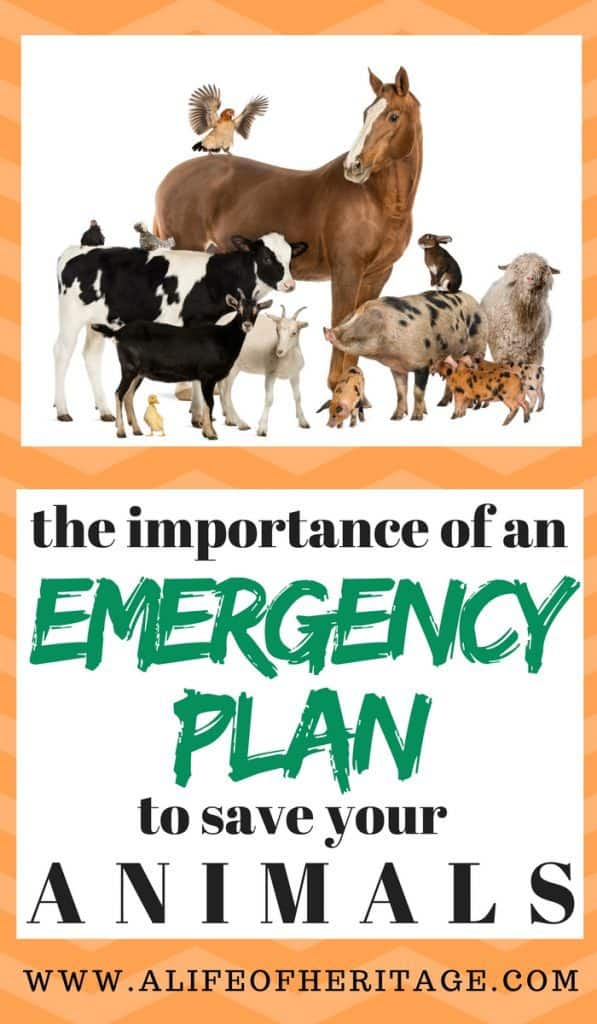 Emergency Health Plan for Animals