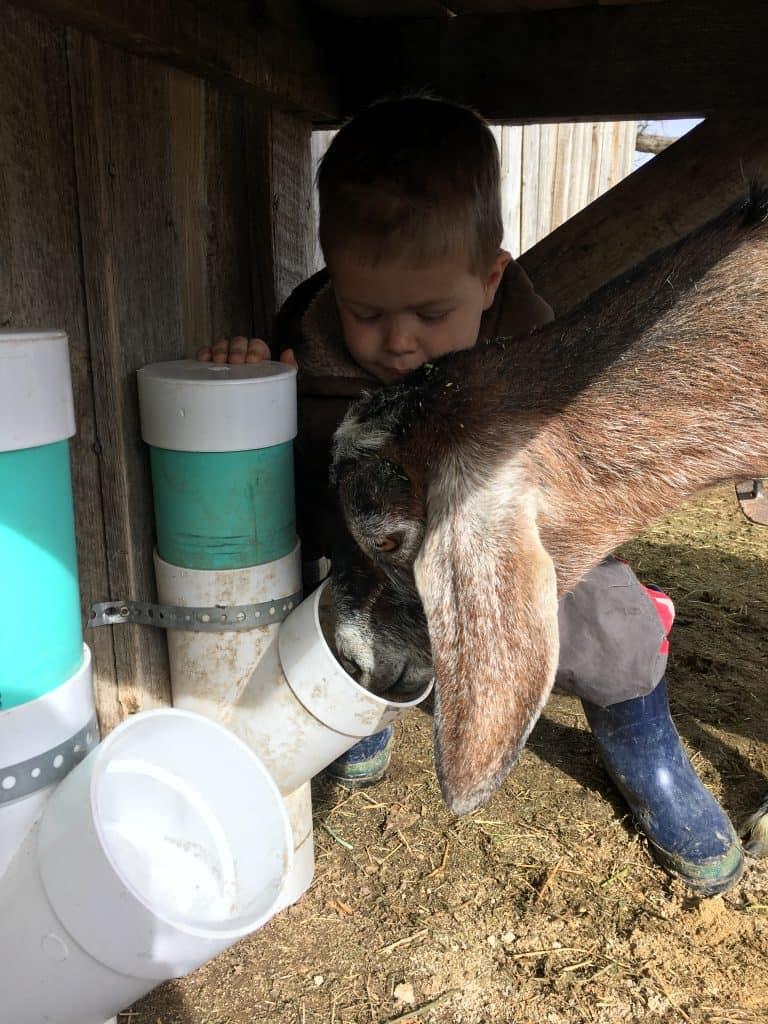 Emergency health plan for animals