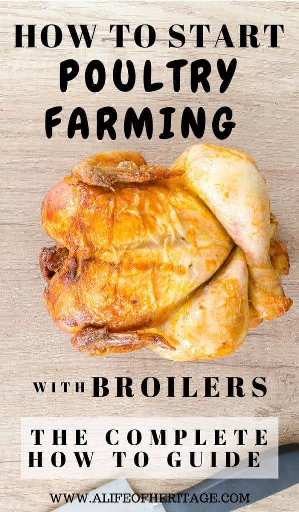 Broiler farming. How to raise chickens and sell them for meat.