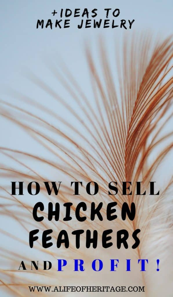 Chicken Feathers and how to sell chickens feathers