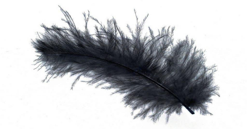 Black Chicken Feather and how to profit selling feathers