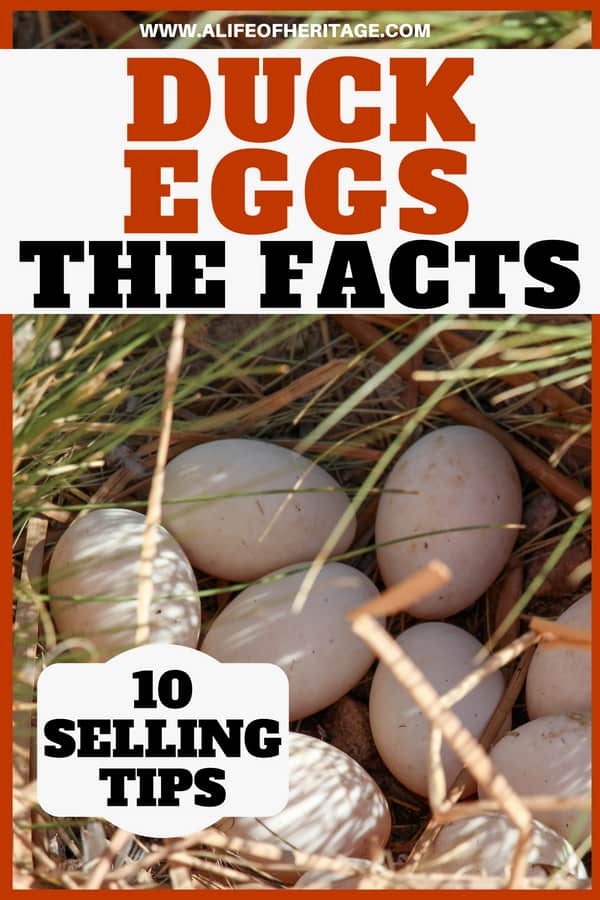Duck egg facts and 10 tips to selling them.