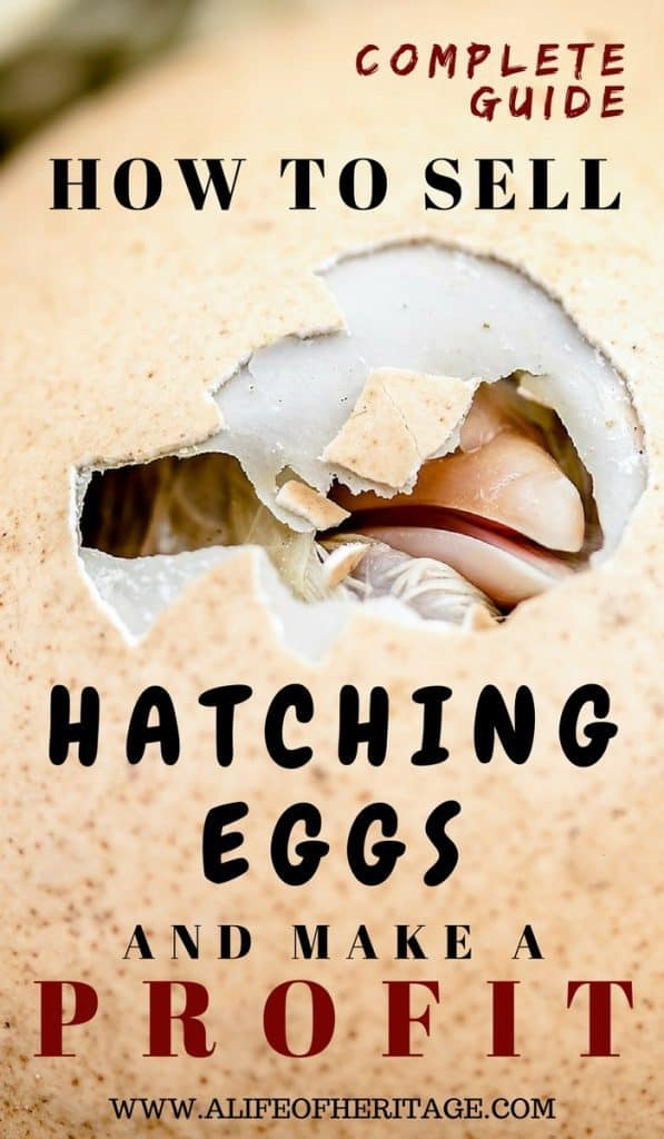 Complete Guide: How to Sell Hatching Eggs and Make a Profit