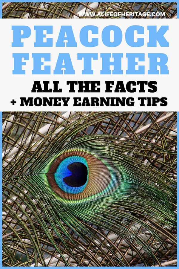 Peacock feather facts, tips on what to make with them, how to sell them and how to make money with peacock feathers.