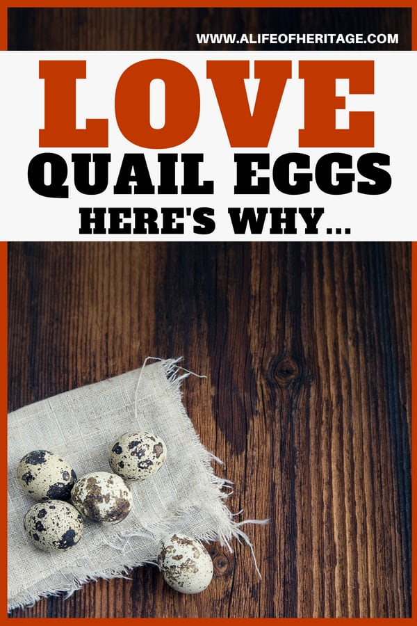 Quail eggs on a rag on a counter