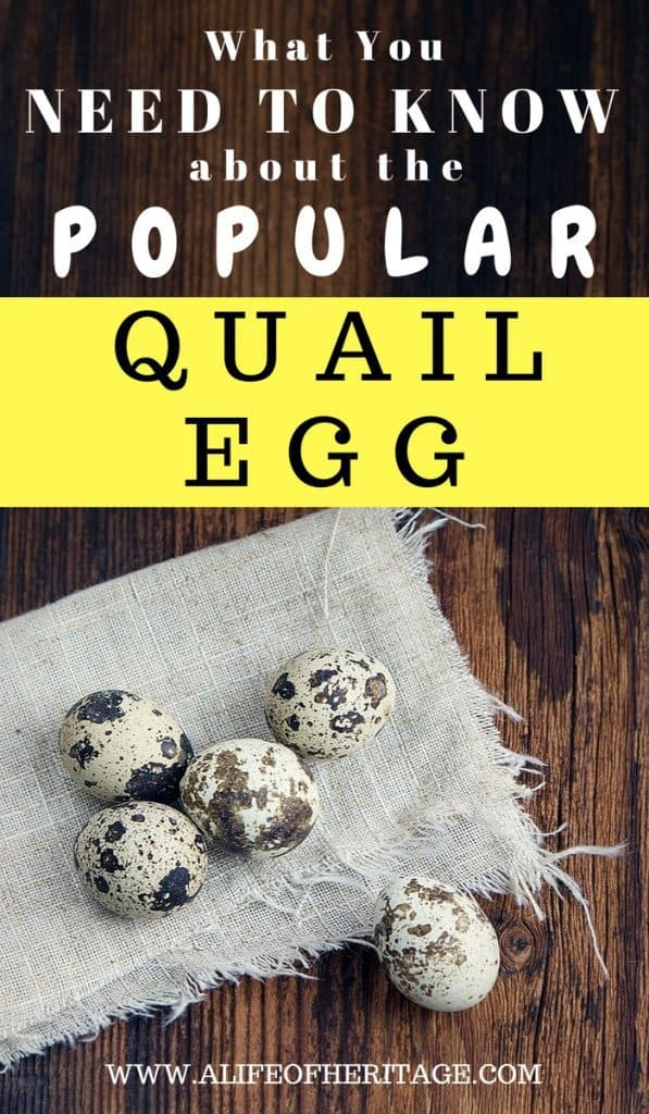 Quail eggs and all the facts about them