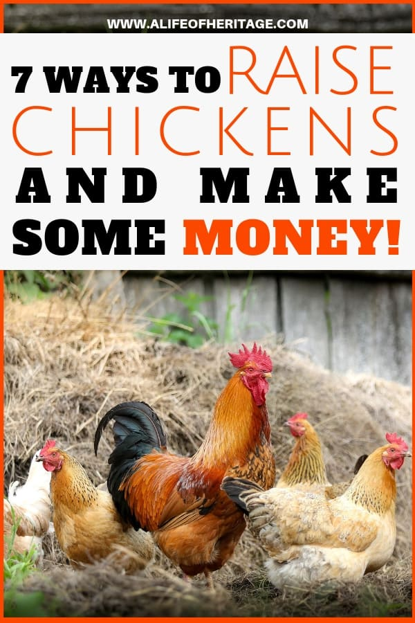 Raising chicken to make some money. Hens and rooster