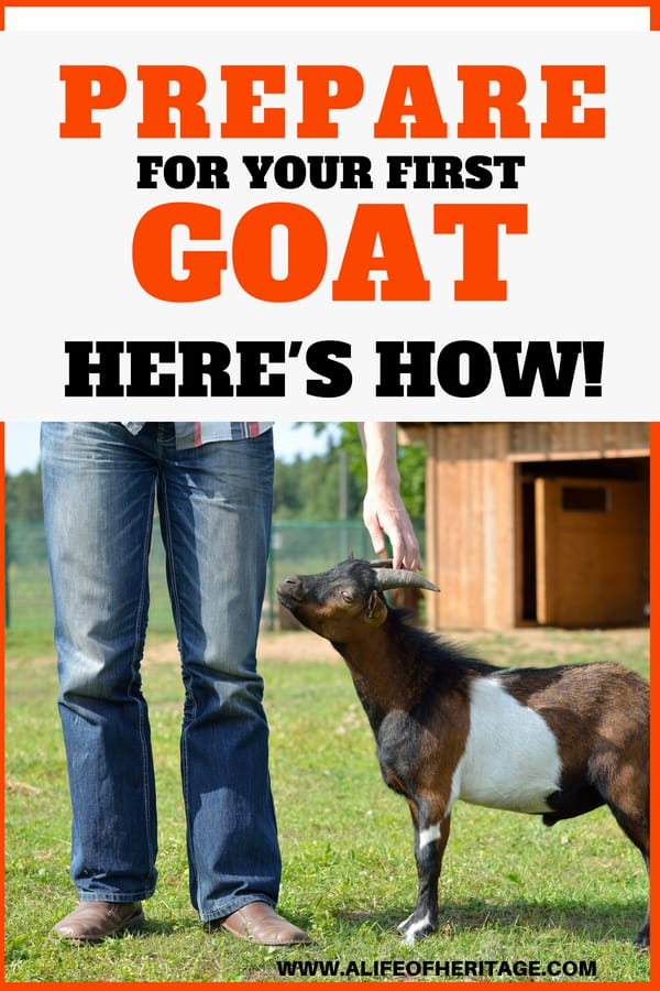 What you need in place for your first goat.