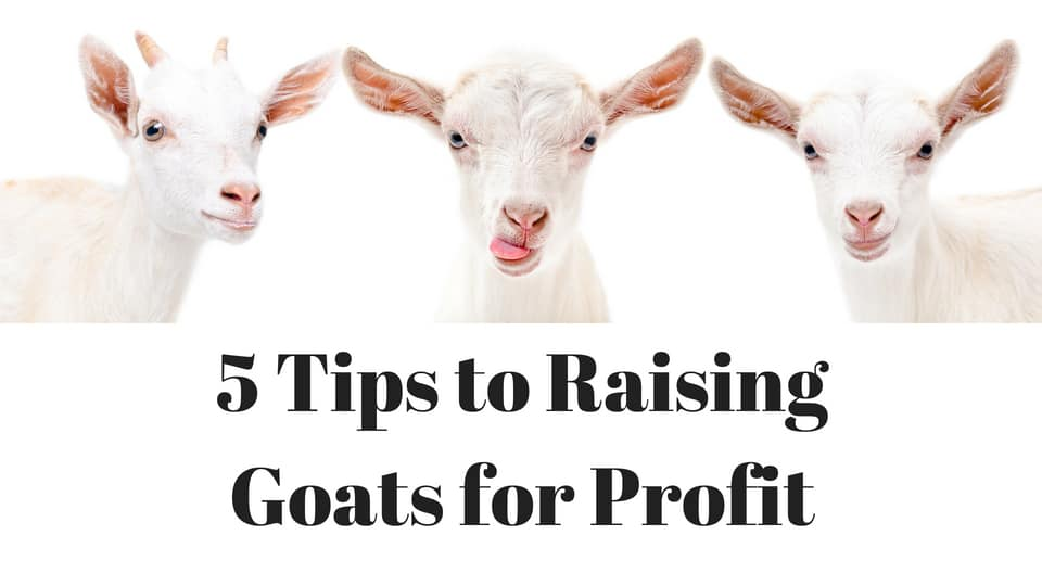 Tips to raising goats for profit