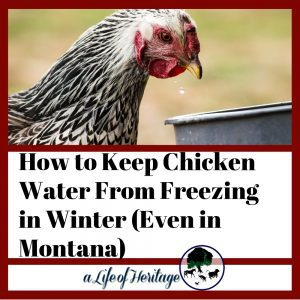 Chicken water in winter can be tough. This is the only way I've found to keep water from freezing in really cold weather.