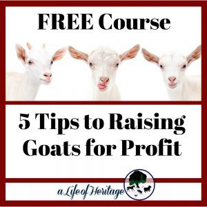 FREE Course: 5 Tips to Raising Goats for Profit