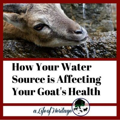 Your Water Source is Affecting Your Goat Herd's Health