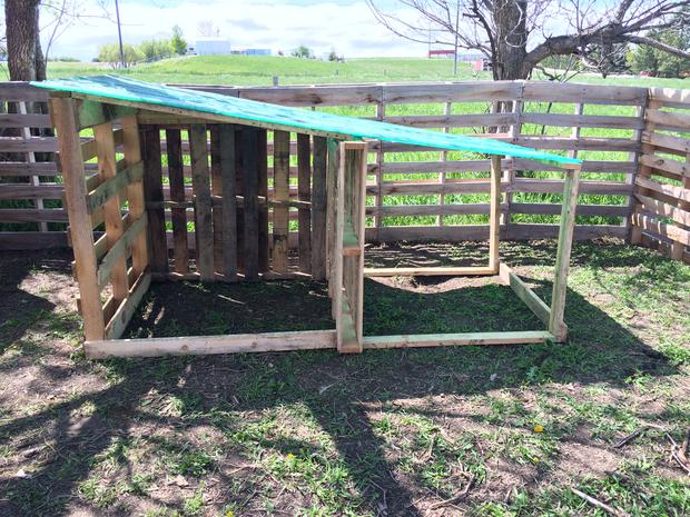 Goat house for winter protection. How to build a goat shelter using pallets. An easy and cost effective way to use easy to find material to make great winter shelters for your goats.